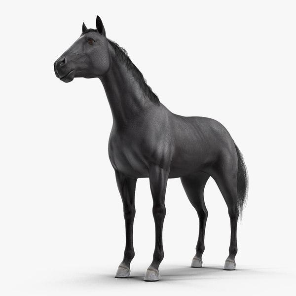 3D black horse fur model