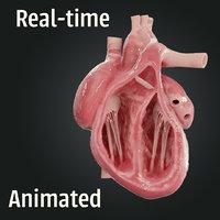 3D realistic human heart