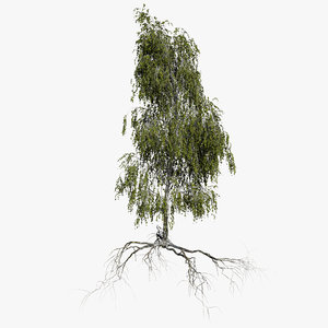3D birch summer 4 tree