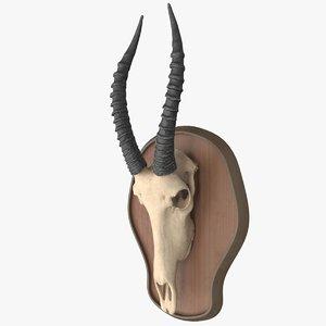 antelope skull 3D model