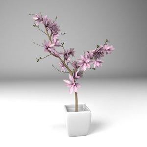 magnolis flower plant pot 3D model