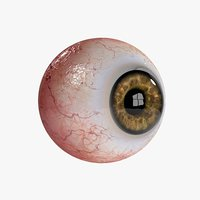 3D model realistic eyeball eye iris