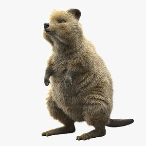 3D quokka ornatrix ephere model