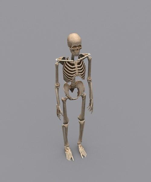 skeleton mobile rigged 3D model