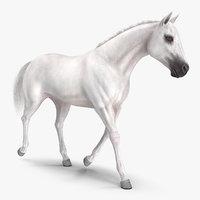 3D white horse fur model