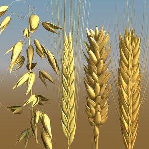 grains wheat oat 3D model