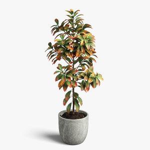 croton plant 3D