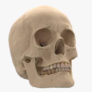 3D female skull model