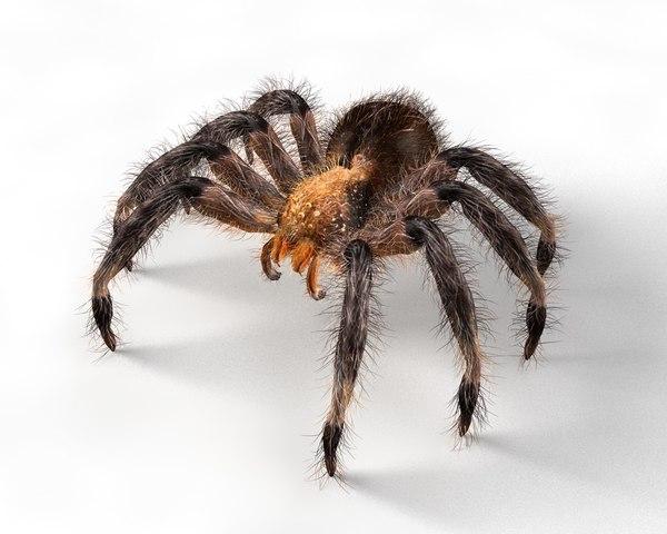 tarantula spider 3D