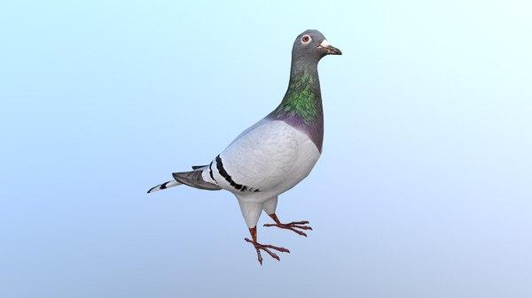 3D dove pigeons