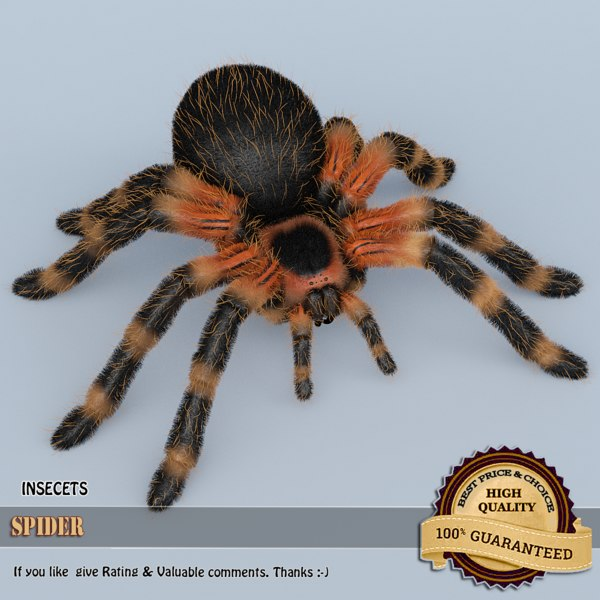 obj spider