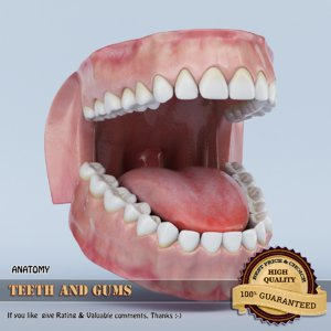 3d teeth gums model