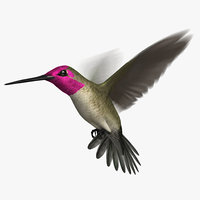 3D anna s hummingbird animation model