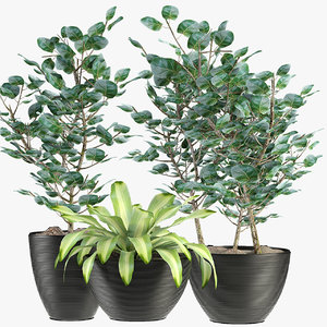 3D exotic plants palm collections