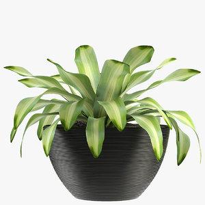 exotic plants palm flower 3D