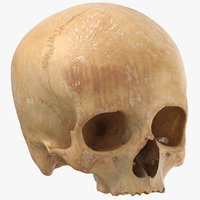 3D human skull cranial 01 model