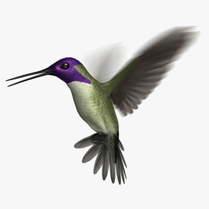 costa s hummingbird animation 3D model