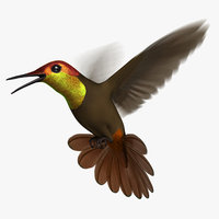 3D ruby-topaz hummingbird animation ruby model