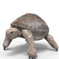 3D model tortoise animations