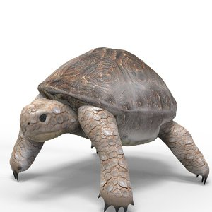 3D model tortoise animations