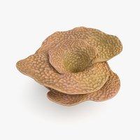 3D cup coral model