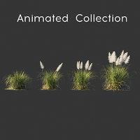 3D cortaderia selloana wind animation model
