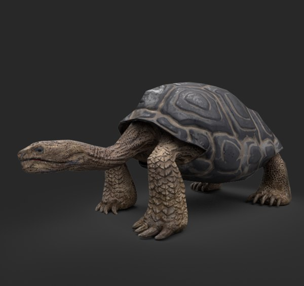galapago turtle 3D model