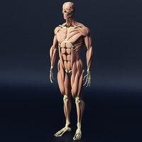 muscle human body 3D model