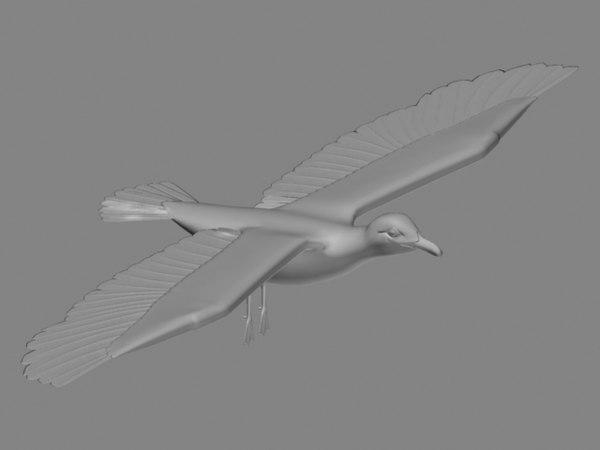3d birds seagull