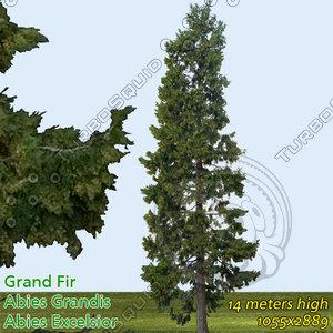 Grand fir Tree Texture - High Resolution