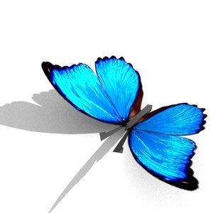 3d model of 7 butterflys
