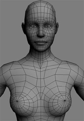female anatomy 3d model