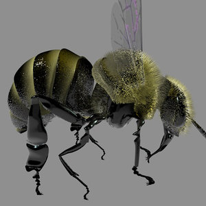c4d honey bee