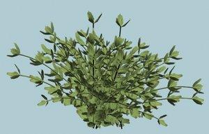 bush shrub 3d model