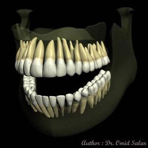 teeth jaws 3d model