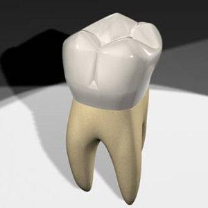 3d model maxillary molar tooth teeth