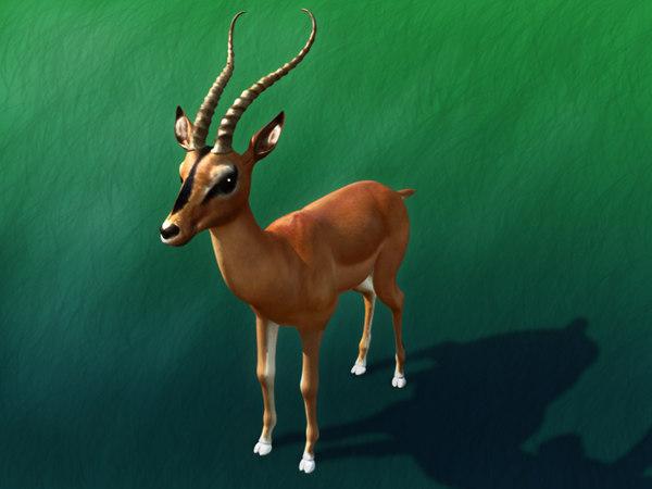 impala deer max