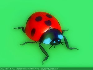 lady beetle 3d ma