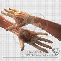 human hand forearm arm max