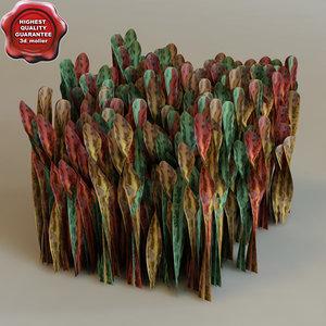 3d model codiaeum variegatum modelled
