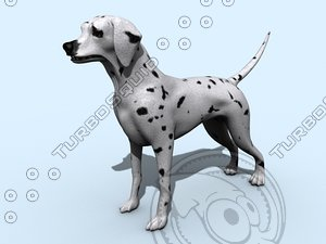 maya dalmatian dog