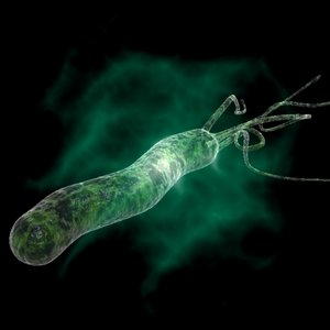 helicobacter pylori max