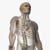 3D skin african male skeleton