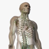 skin african male skeleton 3D model