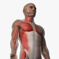 3D model skin african male skeleton
