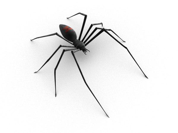 3d black widow spider skeleton model