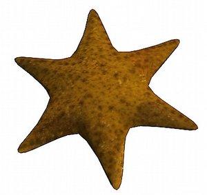 maya seastar star sea