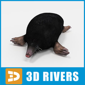 3d mole animals mammal
