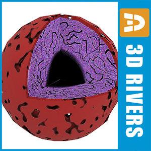 nucleus cell biology 3d model