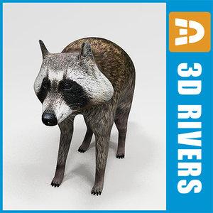 raccoon animals racoon coon 3d model